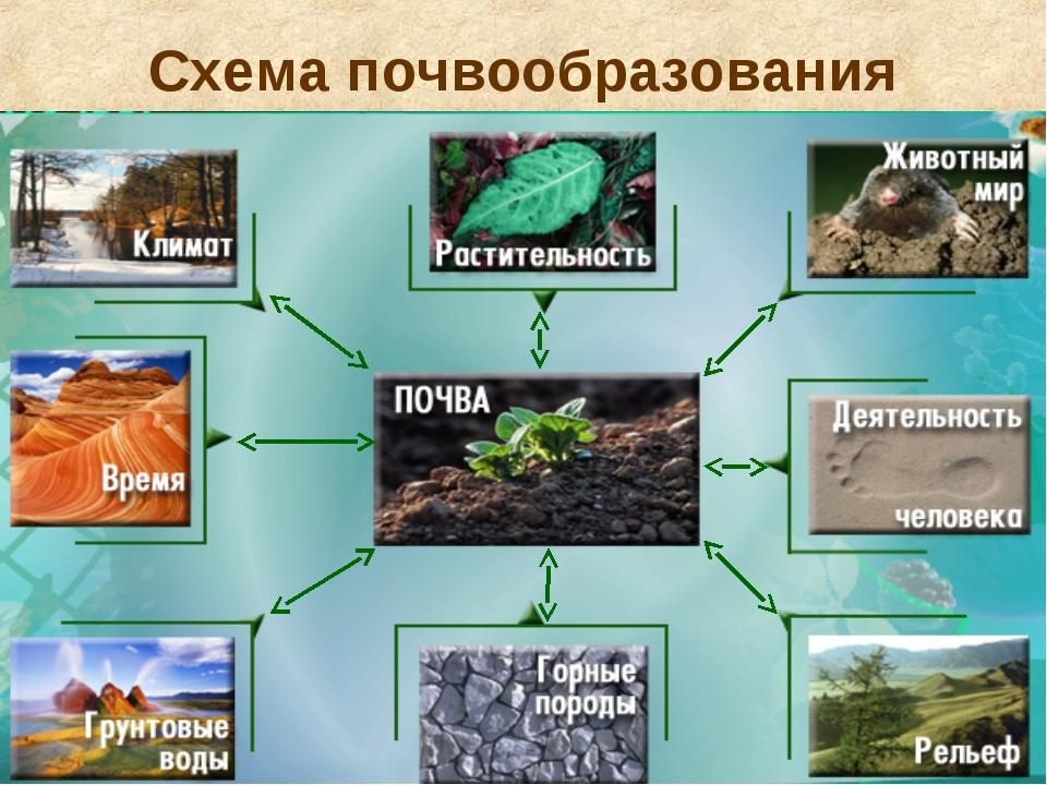 Схема почвообразования