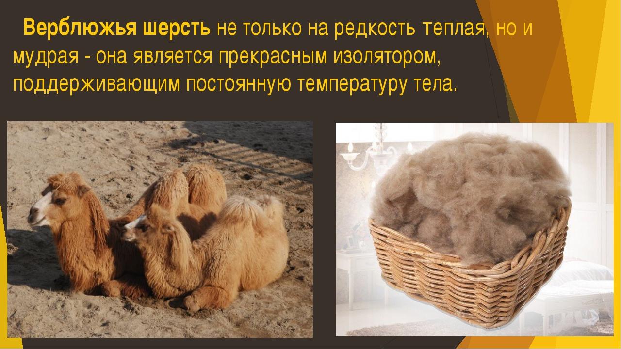 Верблюжья шерсть не только на редкость теплая, но и мудрая - она является пр...