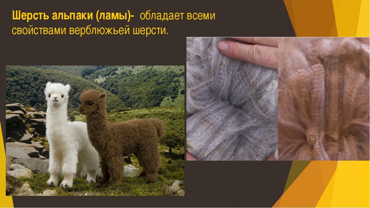 Шерсть альпаки (ламы)- обладает всеми свойствами верблюжьей шерсти.