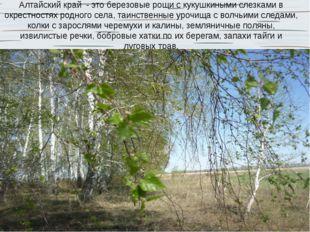 Алтайский край - это березовые рощи с кукушкиными слезками в окрестностях род