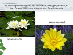 На территории заповедника насчитывается 409 видов растений, из них 12 видов з