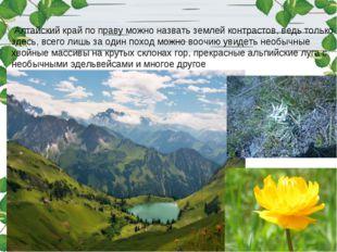 Алтайский край по праву можно назвать землей контрастов, ведь только здесь,