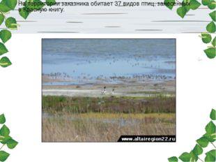 На территории заказника обитает 37 видов птиц, занесенных в Красную книгу.