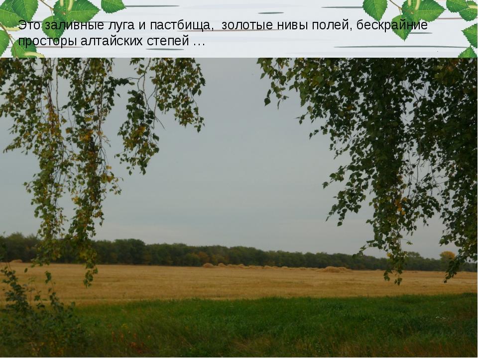 Это заливные луга и пастбища, золотые нивы полей, бескрайние просторы алтайск...