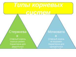 Типы корневых систем Стержневая (главный корень хорошо развит. Характерна дл