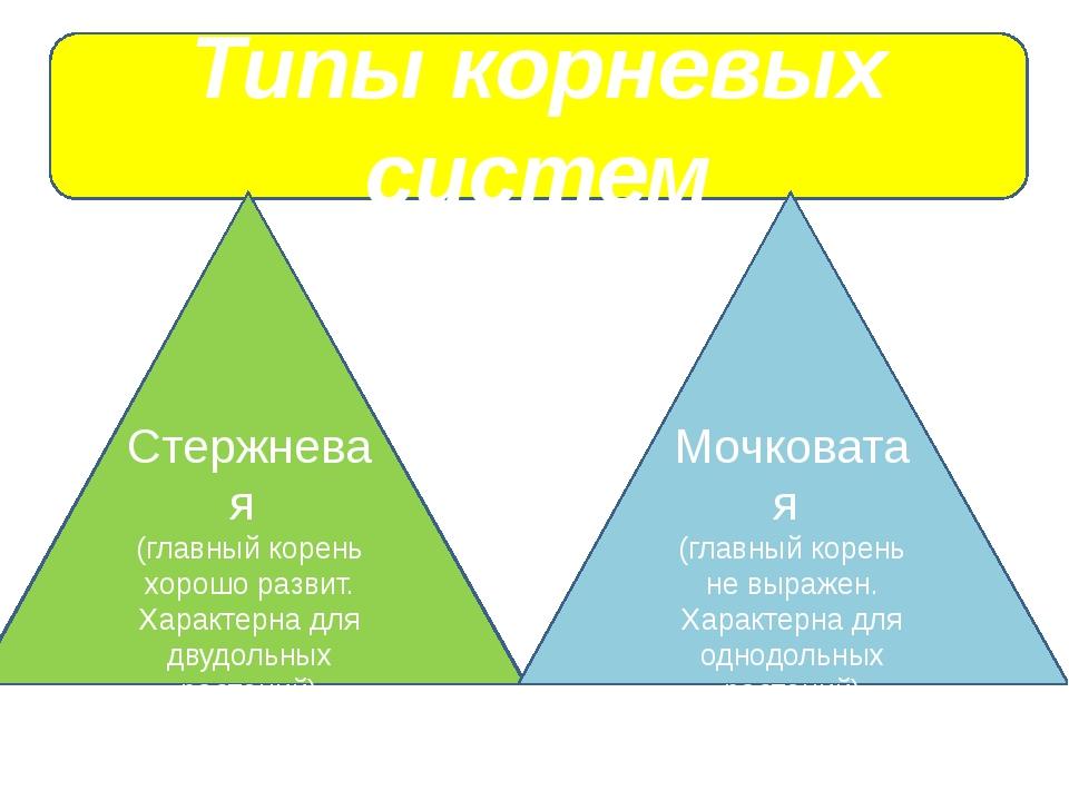 Типы корневых систем Стержневая (главный корень хорошо развит. Характерна дл...