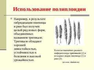 Использование полиплоидии Например, в результате гибридизации пшеницы и ржи б