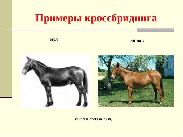 Примеры кроссбридинга (из horse-of-dream.by.ru) мул лошак