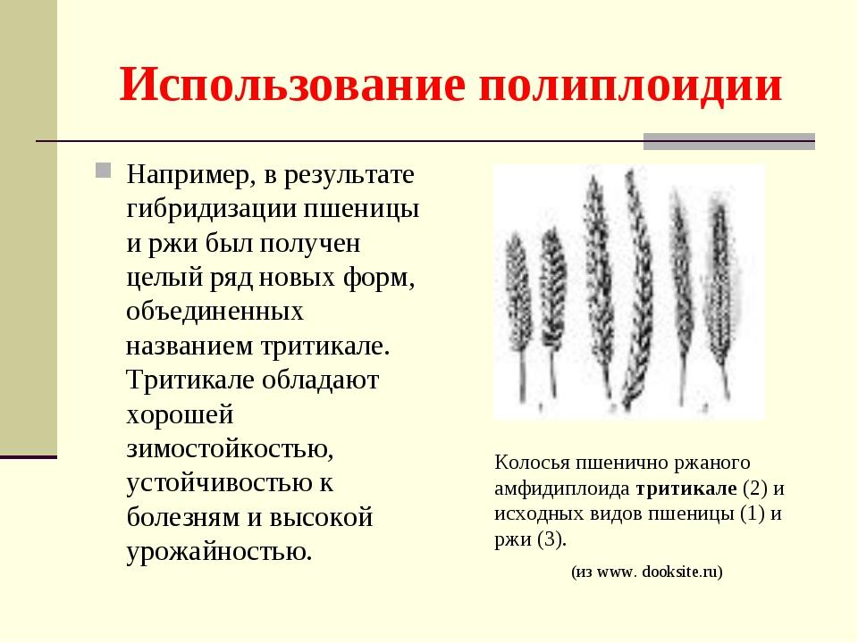 Использование полиплоидии Например, в результате гибридизации пшеницы и ржи б...