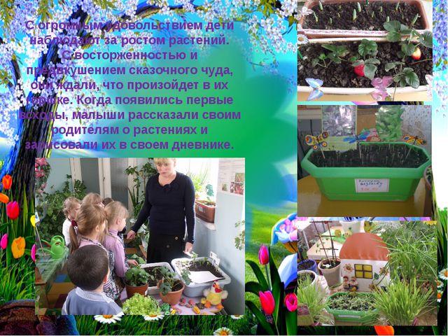 С огромным удовольствием дети наблюдают за ростом растений. С восторженностью...