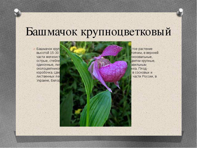 Башмачок крупноцветковый Башмачок крупноцветковый (петушки) - многолетнее тра...