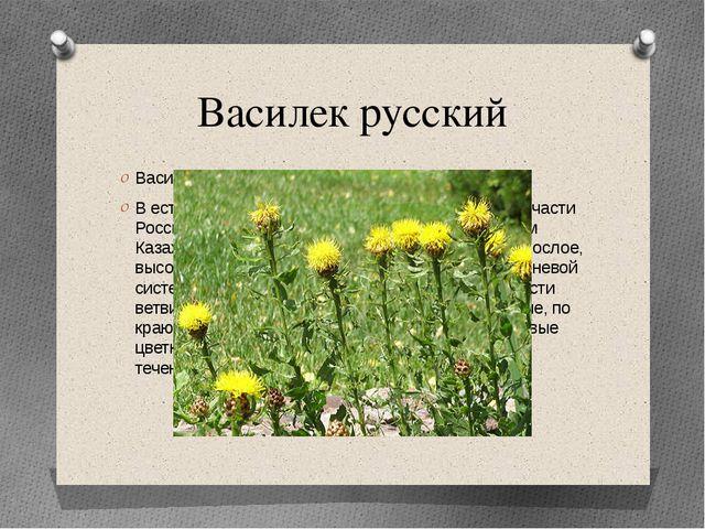Василек русский Василек русский (Centaurеa ruthenica) В естественном виде про...
