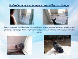 Наблюдение за птенчиками через дверь на балкон Вскоре птенчик «выходит « на у