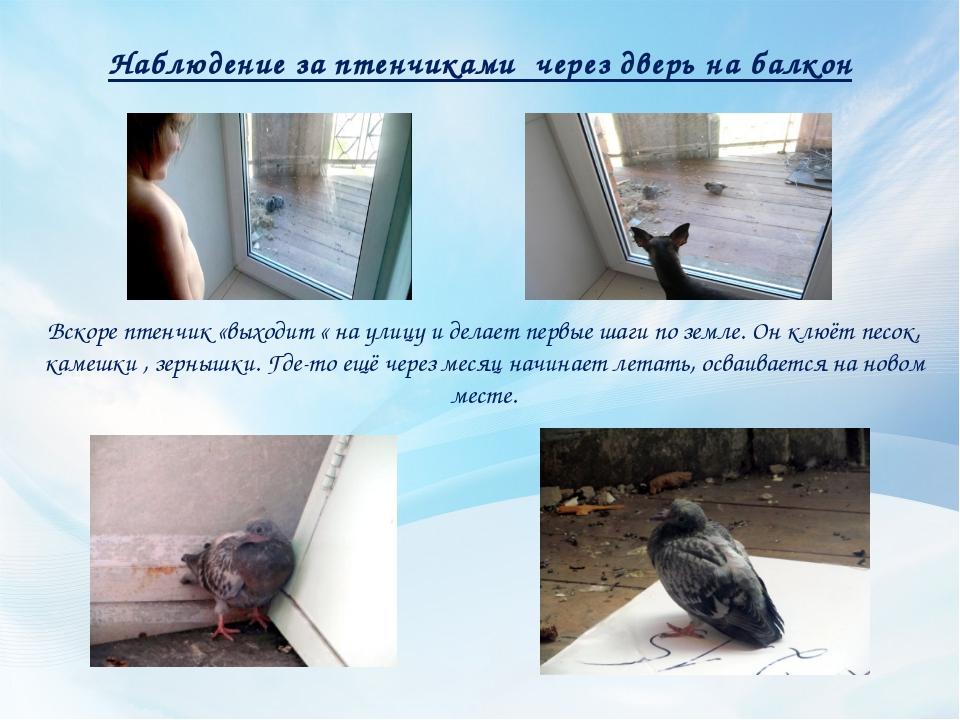 Наблюдение за птенчиками через дверь на балкон Вскоре птенчик «выходит « на у...