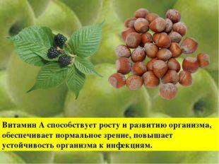 Витамин А способствует росту и развитию организма, обеспечивает нормальное зр