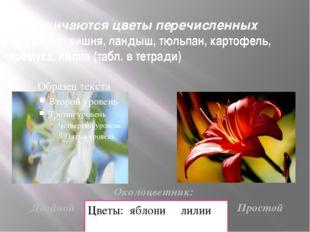 Чем отличаются цветы перечисленных растений: вишня, ландыш, тюльпан, картофел