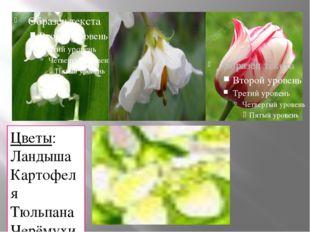Цветы: Ландыша Картофеля Тюльпана Черёмухи.