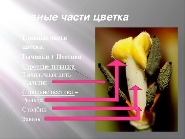 Главные части цветка Главные части цветка: Тычинки + Пестики Строение тычинки...