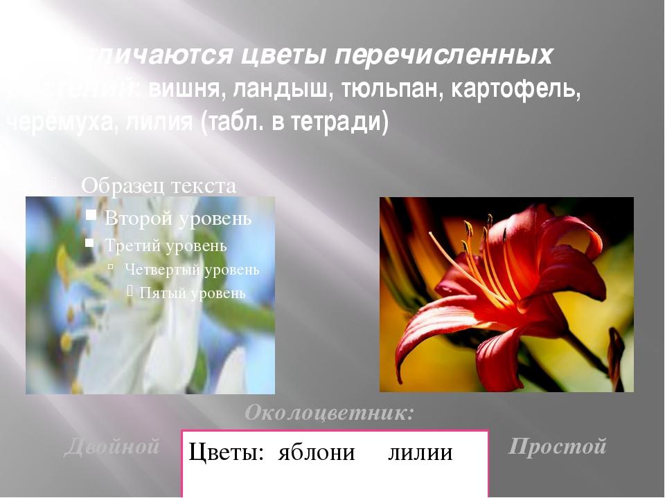 Чем отличаются цветы перечисленных растений: вишня, ландыш, тюльпан, картофел...