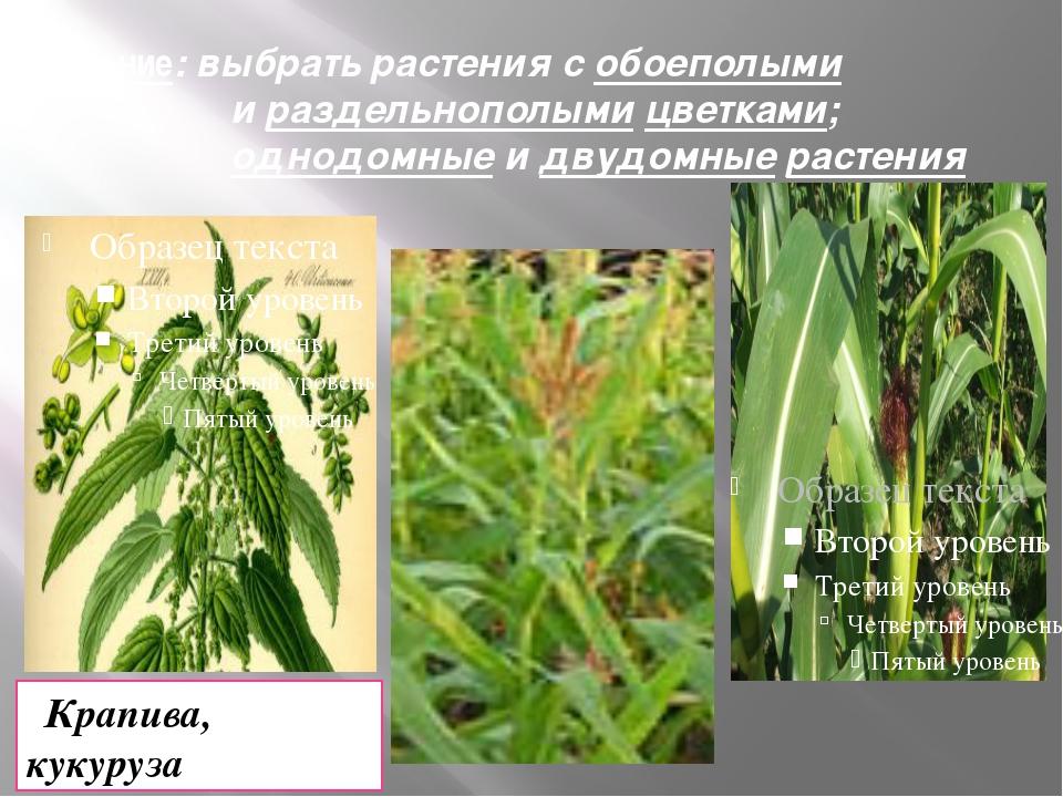 Задание: выбрать растения с обоеполыми и раздельнополыми цветками; однодомные...