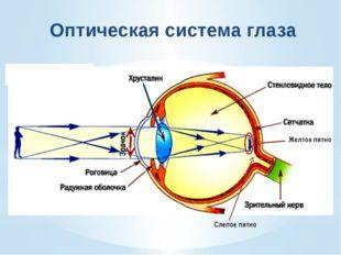 Зрительный анализатор состоит из трех частей: рецепторы сетчатки глаза, зрит