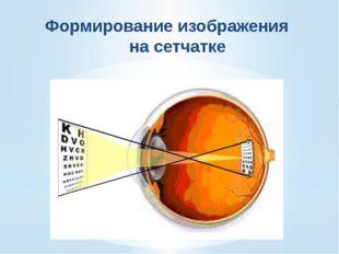 Структура глаза Характеристика Хрусталик А. Выполняет питательную функцию 2.