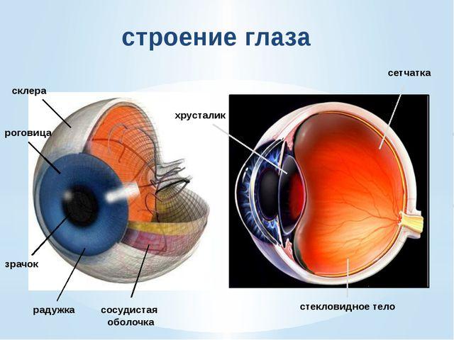 сетчатка глаза Палочки 125 миллионов Колбочки 7 миллионов Слепое пятно Изобра...