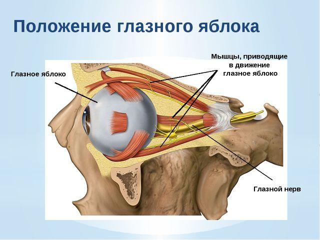 Структуры глаза Особенности строения Функции 1. Белочнаяоболочка (склера)  ...