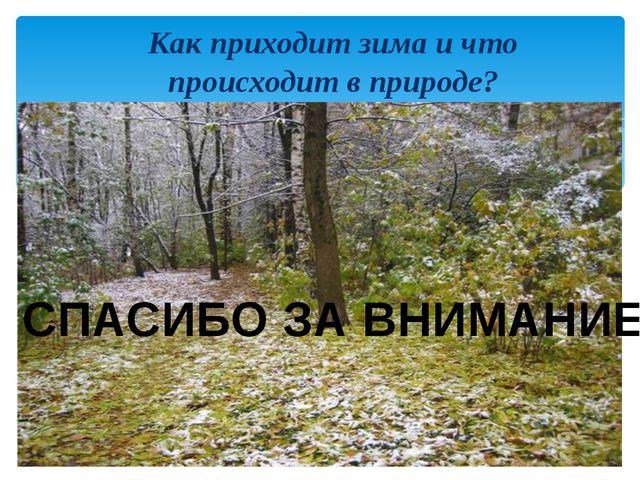 Как приходит зима и что происходит в природе? СПАСИБО ЗА ВНИМАНИЕ