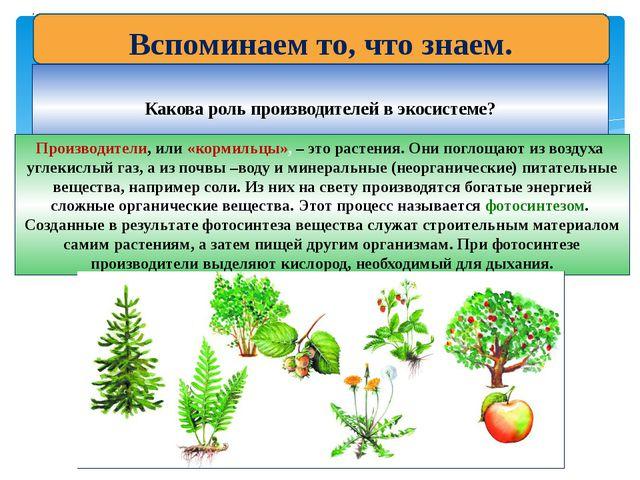 Вспоминаем то, что знаем. Какова роль производителей в экосистеме? Производит...