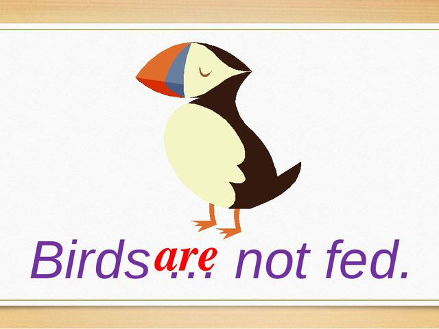 Birds … not fed. are