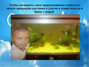 Чтобы проверить свое предположения я взяла из своего аквариума растения и ули