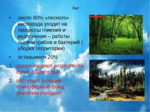 Лес около 80% «лесного» кислорода уходит на процессы гниения и разложения –