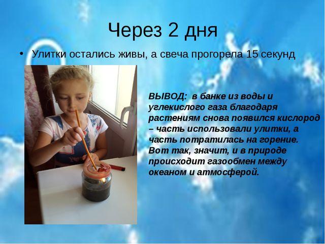 Через 2 дня Улитки остались живы, а свеча прогорела 15 секунд ВЫВОД: в банке...