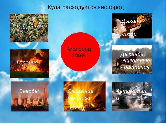 Куда расходуется кислород Кислород 100% Гниение Дыхание -люди Сжигание топлив...