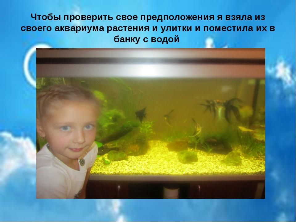Чтобы проверить свое предположения я взяла из своего аквариума растения и ули...