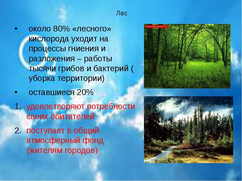 Лес около 80% «лесного» кислорода уходит на процессы гниения и разложения –...