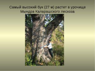 Самый высокий бук (27 м) растет в урочище Мындра Каларашского лесхоза
