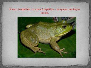 Класс Амфибии от греч Amphibia – ведущие двойную жизнь