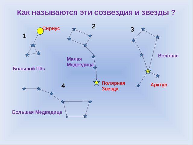 Как называются эти созвездия и звезды ? 1 2 3 4 Большой Пёс Сириус Малая Медв...