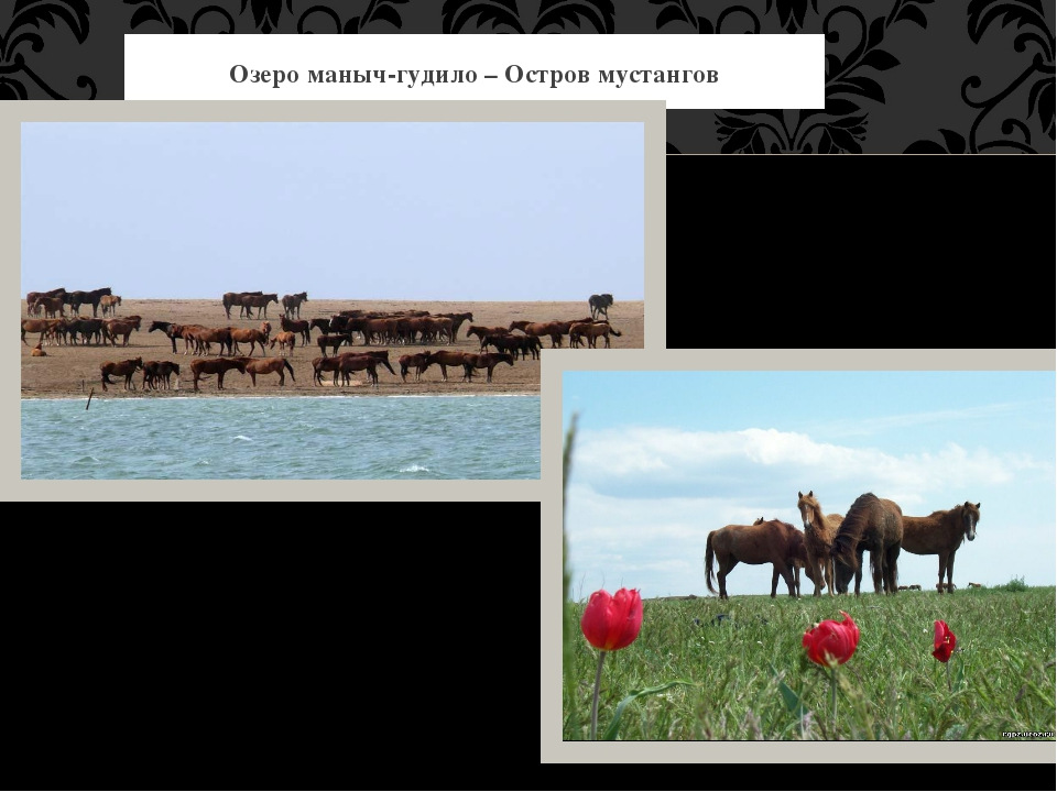 Озеро маныч-гудило – Остров мустангов