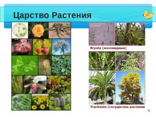 * Царство Растения