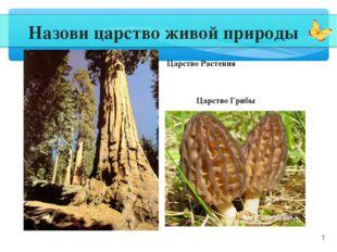 * Назови царство живой природы Царство Растения Царство Грибы