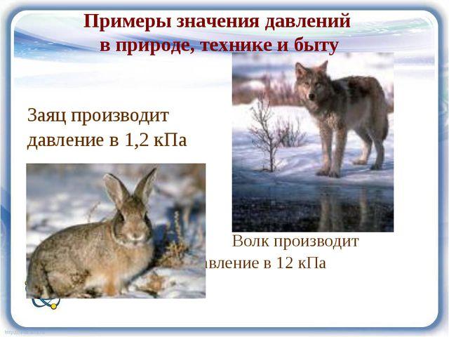 Заяц производит давление в 1,2 кПа Волк производит давление в 12 кПа Примеры...