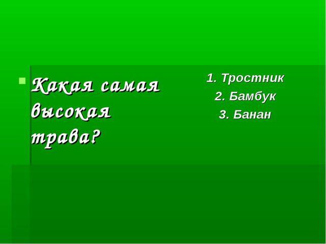 Какая самая высокая трава? 1. Тростник 2. Бамбук 3. Банан