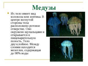 Медузы Их тело имеет вид колокола или зонтика. В центре вогнутой стороны тела