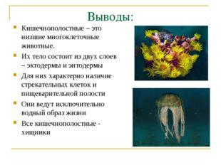 Выводы: Кишечнополостные – это низшие многоклеточные животные. Их тело состои
