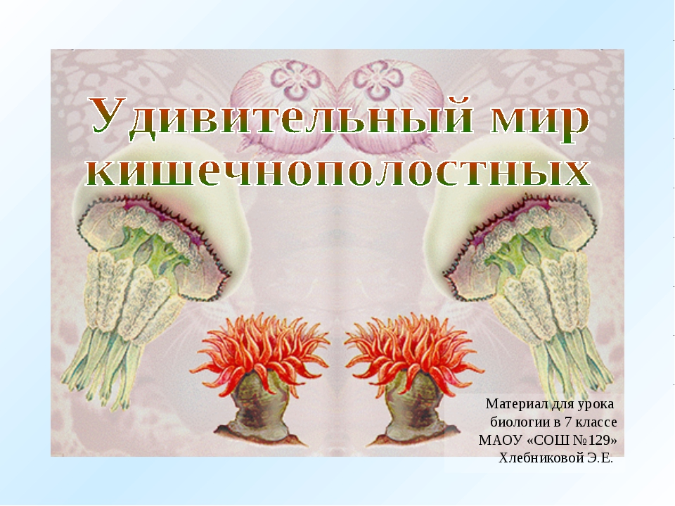 Материал для урока биологии в 7 классе МАОУ «СОШ №129» Хлебниковой Э.Е.
