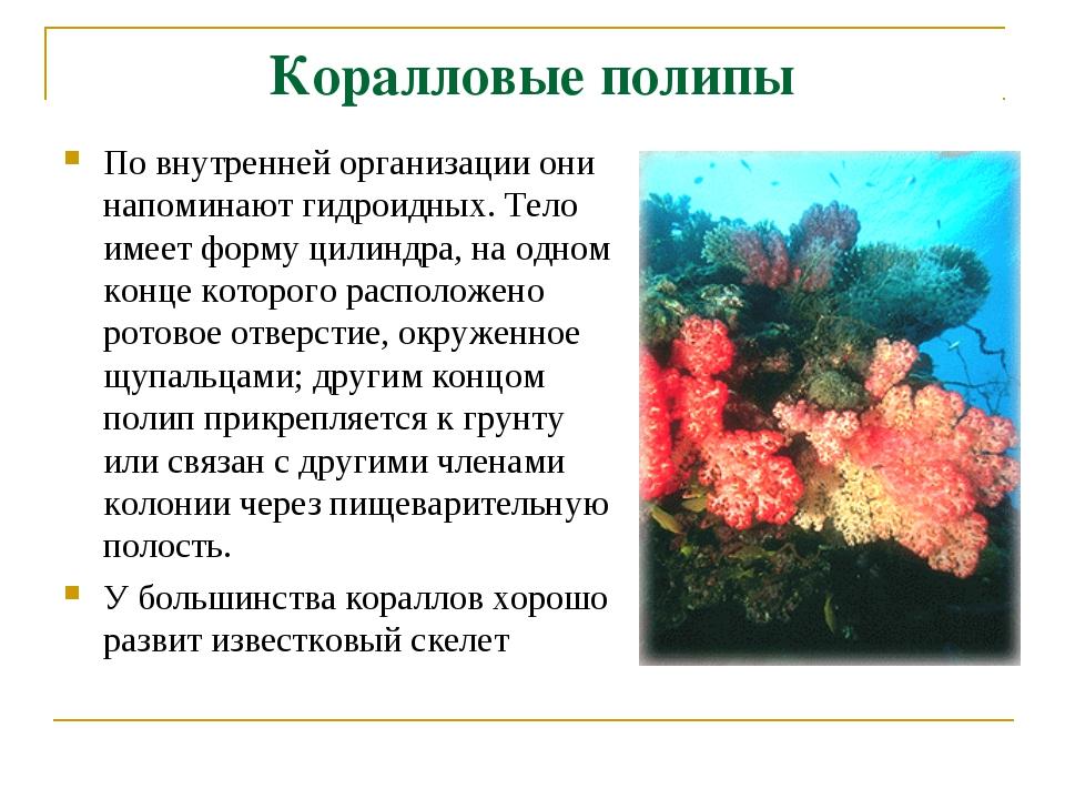 Коралловые полипы По внутренней организации они напоминают гидроидных. Тело и...