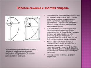 Золотое сечение и золотая спираль В биологических исследованиях было показано